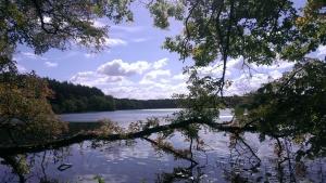 Blick durch Blattwerk auf einen klaren See